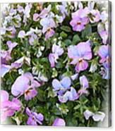 Begonias In Bloom Canvas Print