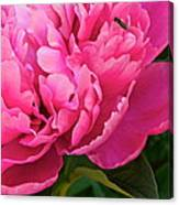 Behold The Beauty Canvas Print