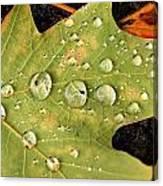 Bejeweled Leaves Canvas Print