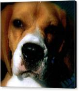Bella The Beagle Canvas Print