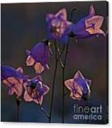 Bellflower Canvas Print