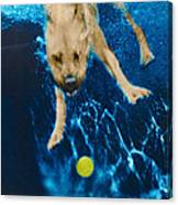 Belly Flop Canvas Print