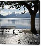 Bench And Tree On The Lakefront Canvas Print