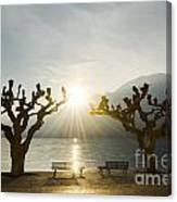 Benches And Trees On The Lakefront Canvas Print