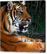 Bengal Tiger - Teeth Canvas Print