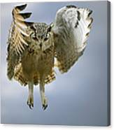 Bengalese Eagle Owl In Flight Canvas Print