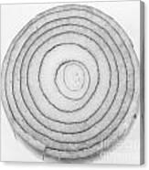 Bermuda Onion Spiral Bw Canvas Print