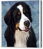 Bernese Mountain Dog 11 Canvas Print