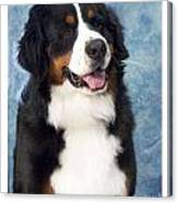 Bernese Mountain Dog 194 Canvas Print