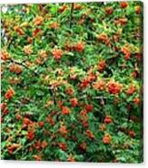 Berries In Profusion Canvas Print