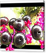 Berry Burst   Poke Berries Canvas Print