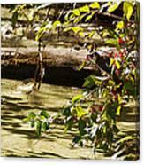 Berry Picker Canvas Print
