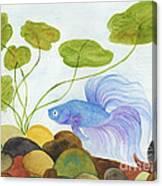 Blue Betta 1 Canvas Print