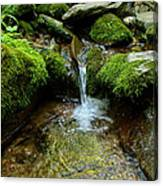 Between The Moss Canvas Print
