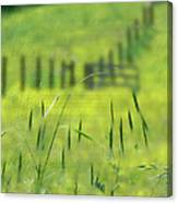 Beyond The Weeds Canvas Print