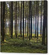 Beyond The Woods Canvas Print