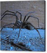 Big Brown Spider Canvas Print