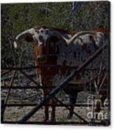 Big Bull Long Horn Canvas Print