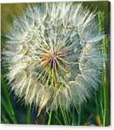 Big Dandelion Seed Canvas Print
