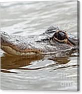Big Eyes Baby Gator Canvas Print