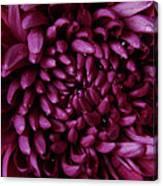 Big Wet Purple Canvas Print