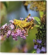 Big Yellow Grasshopper Canvas Print