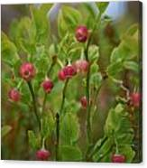 Bilberry Flowers Canvas Print