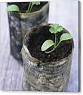 Biodegradable Newspaper Pots Canvas Print