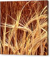 Bioengineered Barley Canvas Print