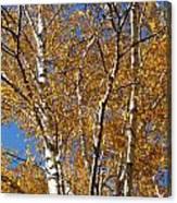 Birch Beauty Canvas Print