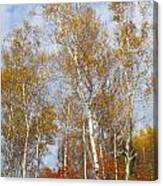 Birch Grove 4269 Canvas Print