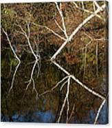 Birch Lake Reflections Canvas Print