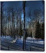 Birch Shadows Canvas Print