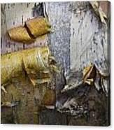 Birch Tree Bark No.0863 Canvas Print