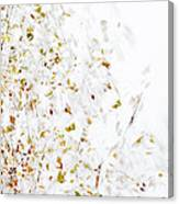 Birch Twigs In Autumn - Multiple Layers Canvas Print