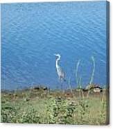 Bird At Lake Varner Canvas Print