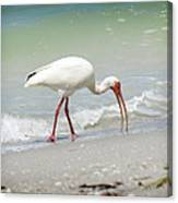 Bird Breakfast Canvas Print