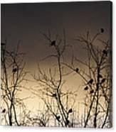 Bird Cove Canvas Print