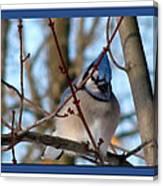 Bird Of Blue Canvas Print
