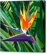 Bird-of-paradise Canvas Print
