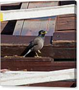 Bird On Boat Canvas Print