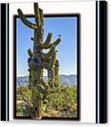 Bird On Cactus Canvas Print