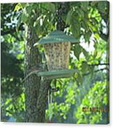 Bird On Full Feeder Canvas Print