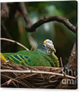 Bird On Nest Canvas Print