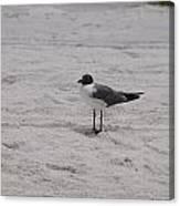 Bird On The Beach 2 Canvas Print