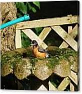 Birdbath Shower  Ll Canvas Print