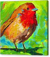 Birdie Bird - Robin Canvas Print
