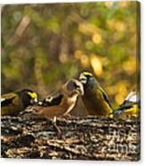 Birds Of Yellow Canvas Print