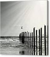Birds On Outer Banks Canvas Print