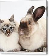 Birman Cat And Colorpoint Rabbit Canvas Print